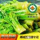 有机蔬菜东北野生刺嫩芽长白山珍刺龙牙新鲜刺老芽速冻山野菜特产