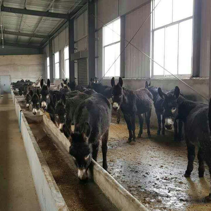 陕西宝马生物畜牧养殖黑毛驴