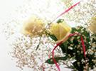 国内的鲜花流通网络初步形成