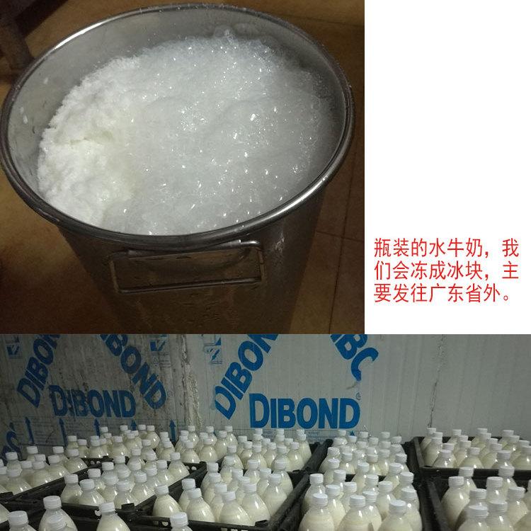 宝运来水牛奶厂家直销 广东水牛奶批发 零添加奶源价格美丽深圳 广州 佛山送货上门