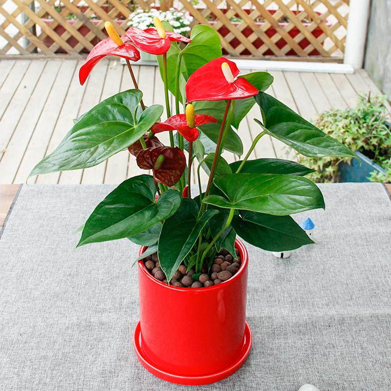武汉写字楼办公室室内植物盆栽送货上门可出租摆租赁