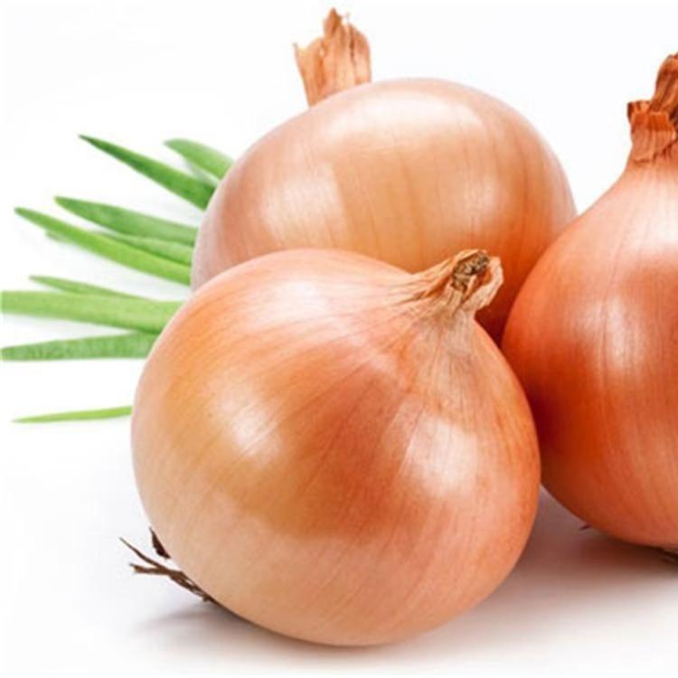 紫皮洋葱 新鲜蔬菜农产品红皮圆葱头代存