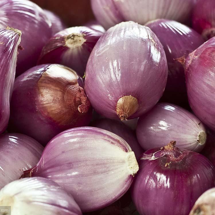 长期供应紫皮洋葱 绿色新鲜蔬菜洋葱 农产品红皮圆葱头 量大价优
