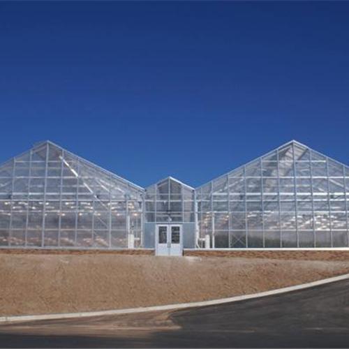 山西 纹络式连栋玻璃温室大棚建造 建设公司
