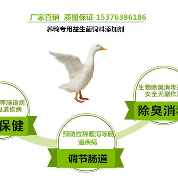 肉鸭习惯性拉稀用健美益生菌调节肠道效果好
