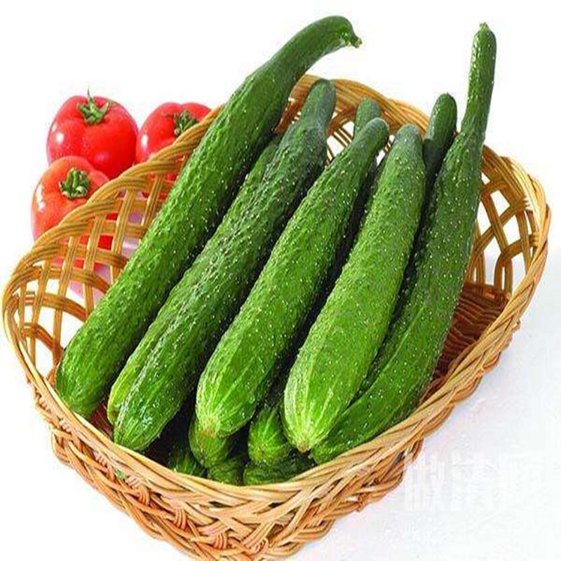 农家现摘现发新鲜蔬菜水果黄瓜