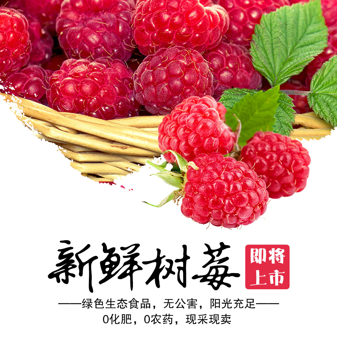 云南红树莓 天然有机 鲜甜可口 可到农场实地考察