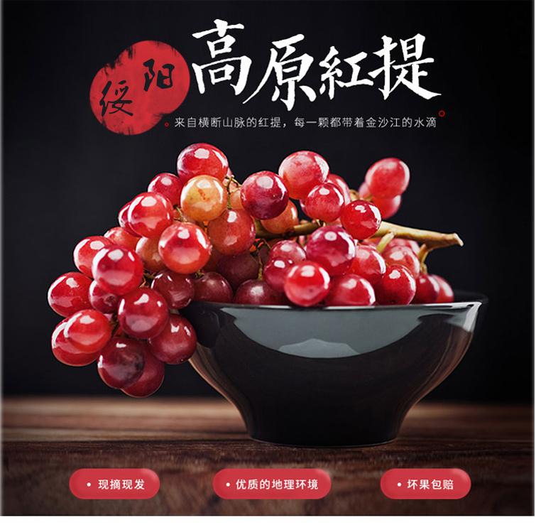 【采摘园林】贵州绥阳金色阳光红提葡萄 新鲜水果 现摘现发 欢迎园林采摘