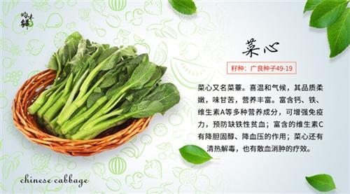 天津有機蔬菜_青昀初陽_天津有機蔬菜商城