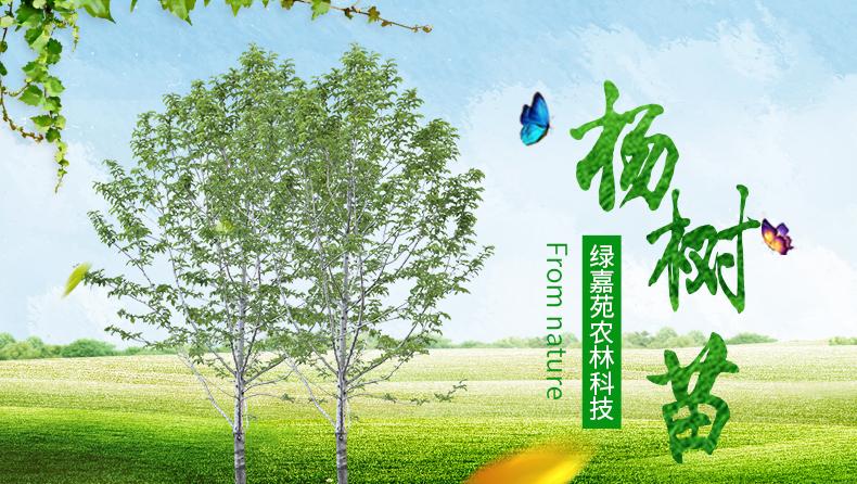 绿嘉苑高品质树苗