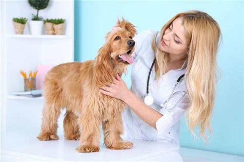 宠物医院|贝贝宠物俱乐部(图)|吉祥村宠物医院