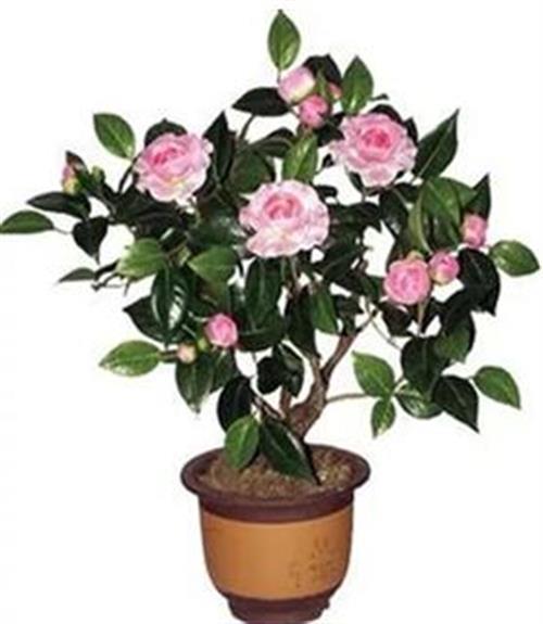 漢口北花卉出租 美化家園(圖) 辦公室花卉出租