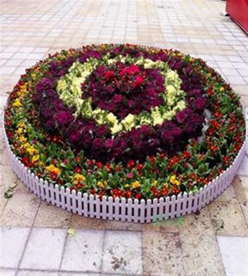 汉口北花卉出租 美化家园 植物花卉出租