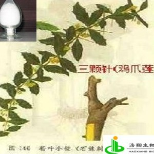 小檗胺(三颗针) 浩翔生物专业生产厂商