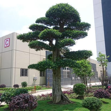 苏州公司厂区绿化 厂区绿化景观设计 苏州学校校园绿化工程