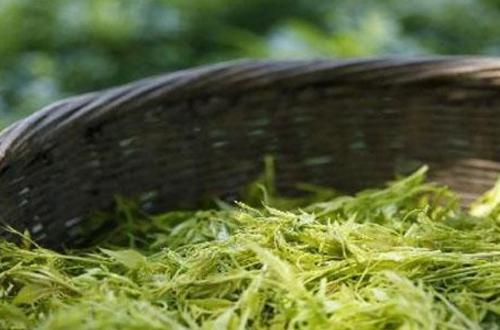 藤茶哪一点是其他普通茶叶不可比拟的?其中原理是什么?