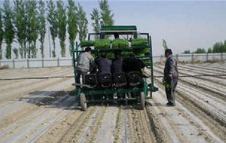 长顺县积极引导农民种植商品辣椒,做大做强辣椒产业