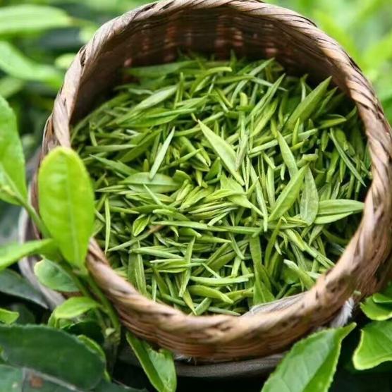 长期供应绿茶   散装