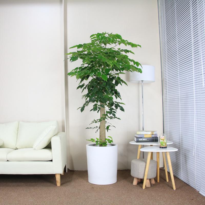 武漢室內植物報價花木出租花木租賃武漢室內園藝公司報價